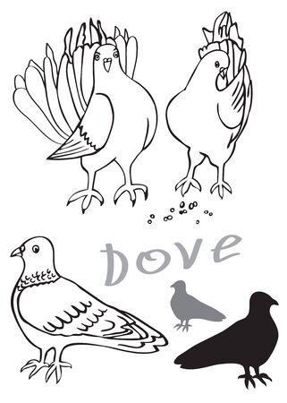 흰색 배경에 그림입니다. 아름 다운 비둘기 남성과 여성 조류.