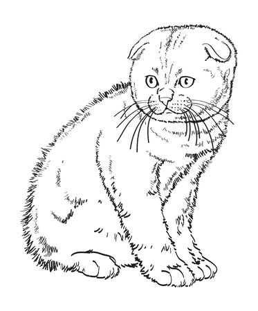 흰색 배경에 드로잉 손 작은 스코틀랜드 lop-eared 새끼 고양이 앉아.