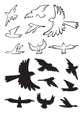 An illustration on a white background contours and silhouettes of different birds in flight