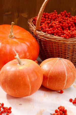 rowanberry: Autumnal still life with pumpkins and rowan-berry