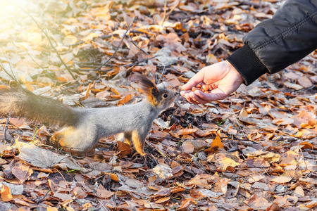 The male feeds the squirrel in the park Stock Photo