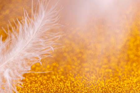 Beautiful white bird feather on a bright Golden background close-up. Selective focus. Free space. Macro. Abstract background with bokeh. High quality photo