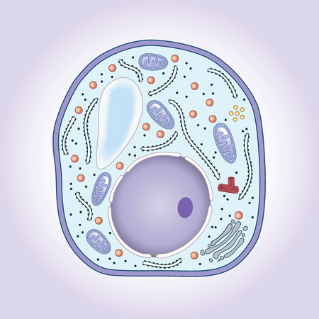 vacuole: Cross-section of mushroom cell, structure. Biology Illustration