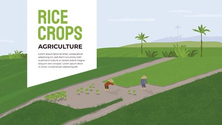 Vector illustration of farmers who transplant rice crops, grow and cultivate seedlings. Couple of people working in a paddy. Smallholder Agriculture in Asia, Indonesia. Template layout, banner, flyer. Illustration