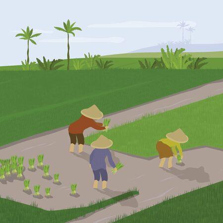 Illustrazione vettoriale di piantagione di risaia. Gli agricoltori trapiantano le colture di riso, coltivano e coltivano. Gruppo di persone che lavorano nel campo di riso. Agricoltura dei piccoli proprietari in Asia, Indonesia. Banner modello, volantino, annuncio.