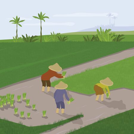Vector illustration of paddy planting. Farmers transplant rice crops, grow and cultivate. Group of people working in rice field. Smallholder agriculture in Asia, Indonesia. Template banner, flyer, ad.