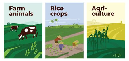 Set of vectors with agriculture, farm animals and rice crops cultivation. Illustrations people working in paddy field, cows in pasture and landscape with maize. Template for poster, banner, flyer, ad.