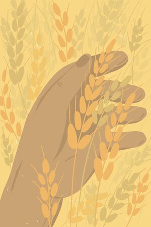 Farmer holding ears of wheat. Ripe grain in human hand. Man checking crop. Agricultural field in countryside. Agriculture or farming poster. Harvest in farm land vector illustration. Cover background