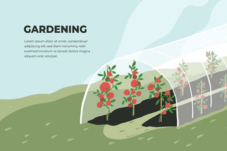 Design template of gardening. Greenhouse with tomato plants. Spring or summer time in garden. Growing vegetables in agriculture. Farming landscape, cultivated land vector illustration. Banner or flyer