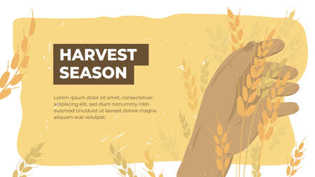 Design template for agriculture or farming. Layout or flyer with farmer holding ears of wheat. Ripe grain in human hand. Man checking crop on field. Harvest season in farm land. Vector illustration Ilustração