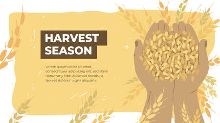 Design template for agriculture or farming. Layout or flyer with farmer hands holding ripe grains of wheat. Agricultural produce. Harvest season in farm land. Handful of cereal vector illustration