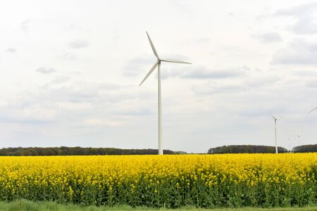 windmills on rapeseed field.Germany. Banco de Imagens