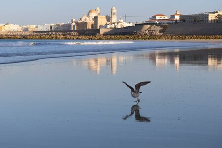 View of Cadiz at dawn with a flying seagull in the foreground