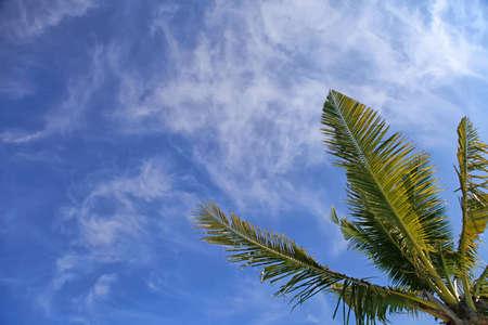 palmtree: Palmtree leaf and blue sky Stock Photo