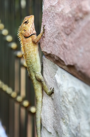lizard on the wall photo