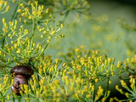 Wallpaper snails in the flowers. Green background.