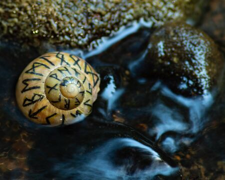 Shell with Norse runes in evening river water.