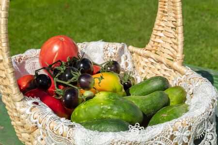 Basket with a crop of vegetables: red and black tomatoes, sweet peppers and cucumbers. Blurred background. Stok Fotoğraf