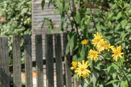 Rural landscape: yellow flowers, green branches, wooden fence and building. Blurred background.