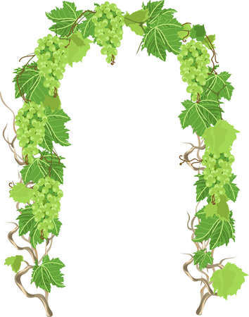 Arch of grapes