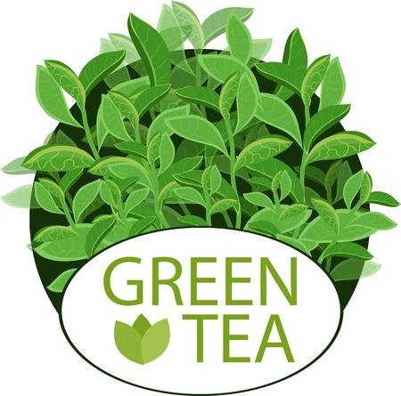 green tea. tea leaves. frame
