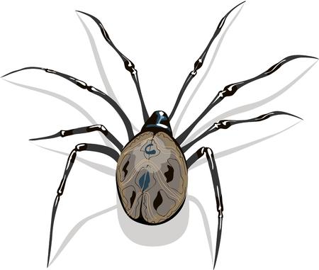 araña aislada en el fondo blanco