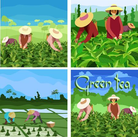 Cueilleurs de thé. définir des images Vecteurs