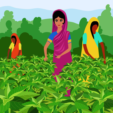 Indian women tea pickers