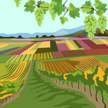 vineyard. multi-colored fields. autumn landscape