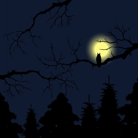 owl on tree at night. silhouette of an owl on a tree