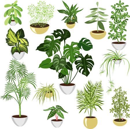 home plants in pots. set