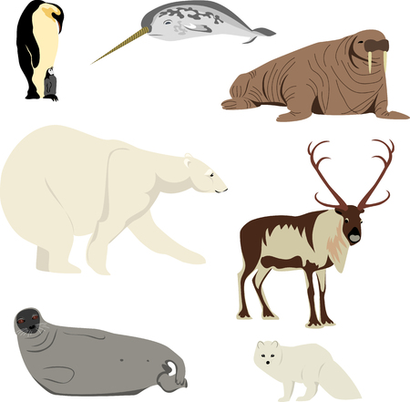 the Arctic animals. set of pictures