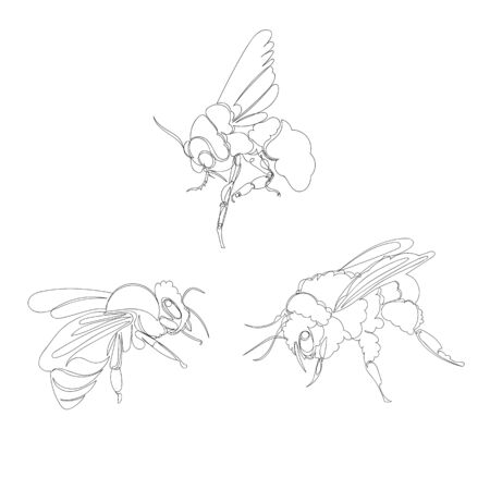bee. one line. vector image of an insect. set of pictures continuous line Ilustração