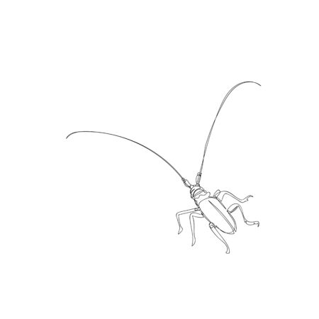 beetle. one line. vector image of an insect. the image of a beetle tattoo Ilustração