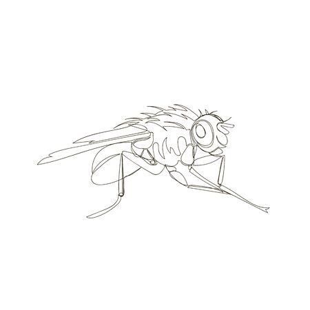 insect fly. one line. vector image of Drosophila. outline drawing Ilustração