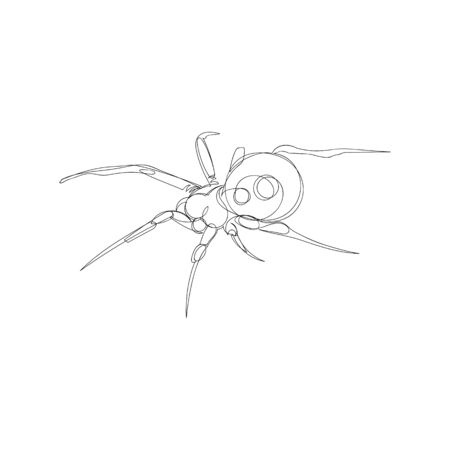 spider. one line. vector image of an insect. poisonous insect