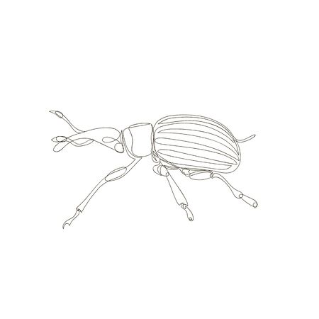 weevil beetle. one continuous line. one line. contour vector Illustration