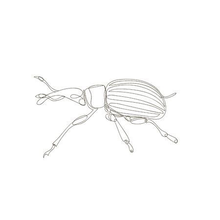 weevil beetle. one continuous line. one line. contour vector Çizim