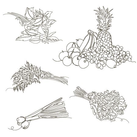 spicy herbs. vector linear image of healthy food. set of contour pictures. one line Foto de archivo - 135461137