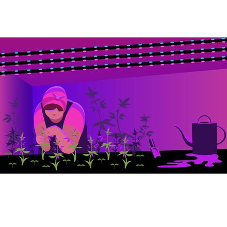 greenhouse. a person works with plants in a greenhouse with a special red light