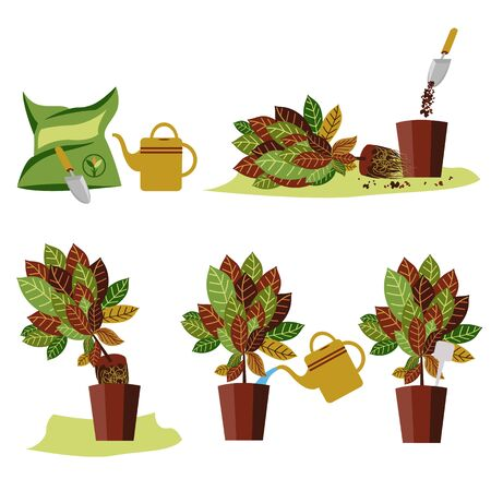 stages of plant transplantation. vector image of a flower with colored leaves. transplant method