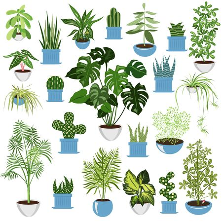homemade flowers. set of vector images of domestic plants. exotic plants in pots for home