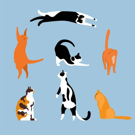 cat. a set of vector isolated illustrations with Pets. cats of different breeds
