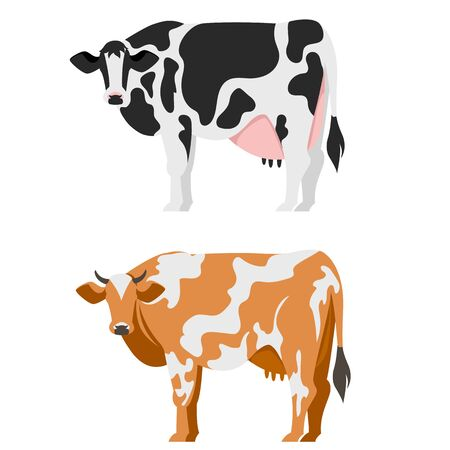 cows. cattle. vector image of cows of different breeds. set of images