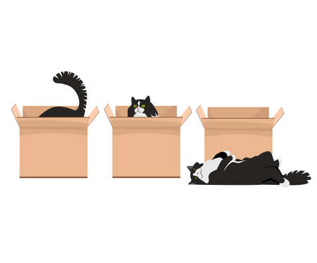 cats and boxes. a set of vector images. illustrations of playing cats