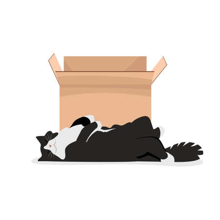 the cat is sleeping. vector illustration of a pet next to a box. fluffy cat