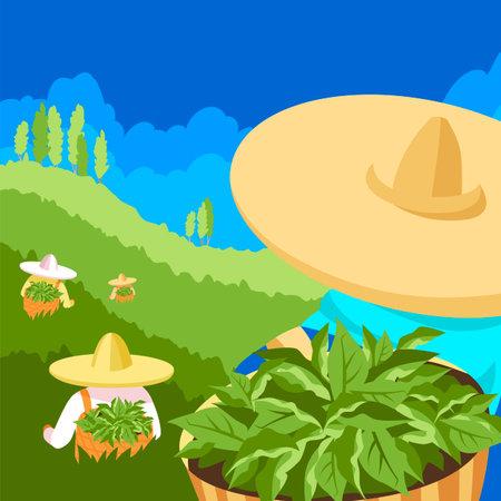 tea pickers. vector illustration of people on a tea plantation. vector 矢量图像