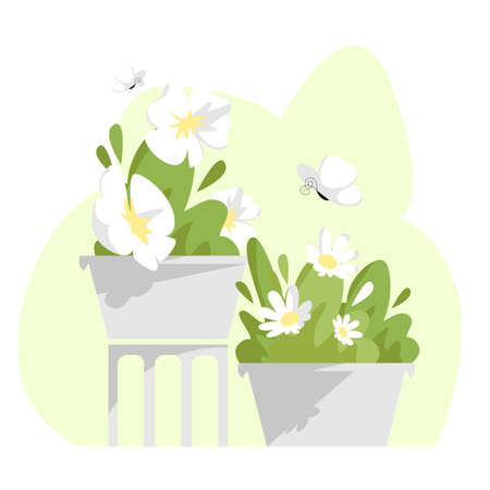 potted flowers. vector illustration of plants in pots with white flowers 矢量图像