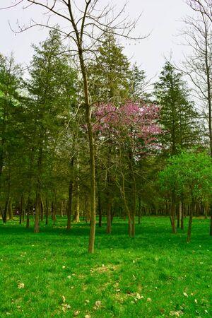 rosewood: spring park, rosewood