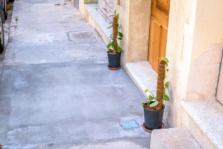 dipladenia: Liana all'aperto, Malta